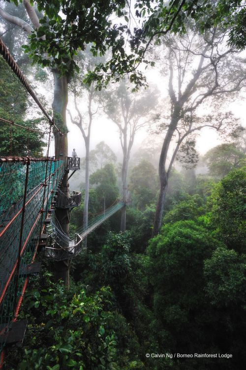 Borneo Rainforest Lodge, Danum