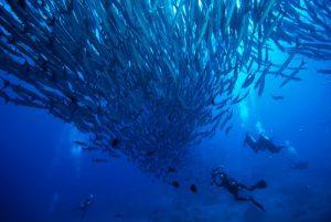 Diving, Sabah, Borneo