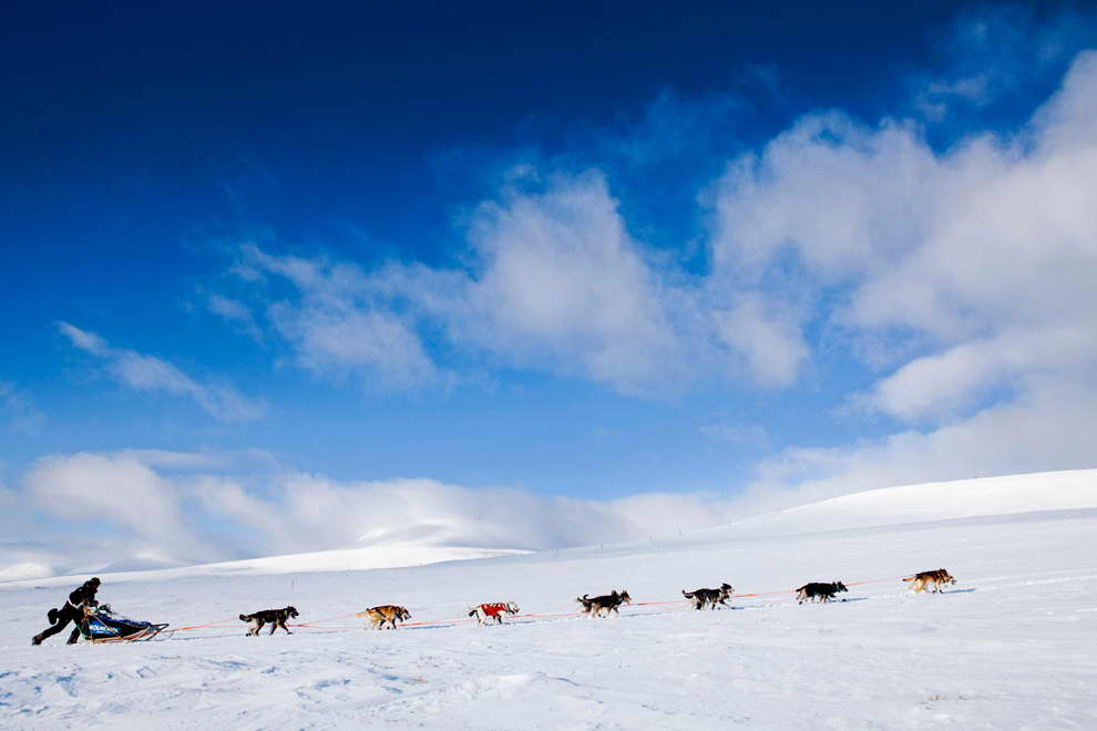 Dog sledding in Finnmark, Norway