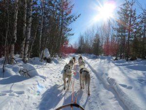 Dog sledding, Finland