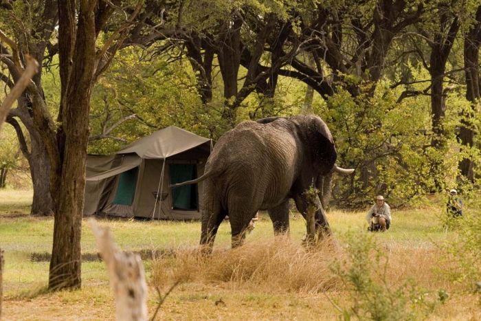 Camping, The Serengeti, Tanzania