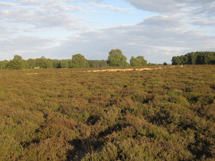 Cavenham Heath, Suffolk