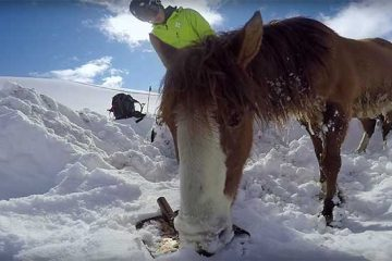 Snowboarders rescue horse