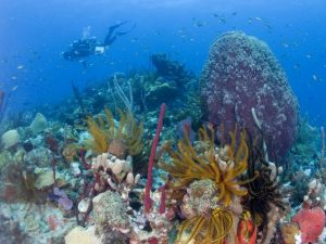 Diving in Champagne Reef, Dominica