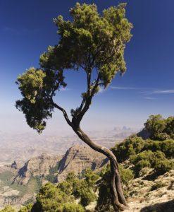 Simien Mountains National Park, Amhara, Ethiopia