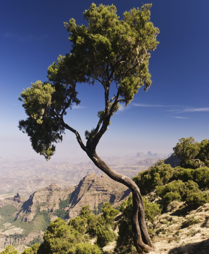 Simien Mountains National Park, Amhara, Ethiopia