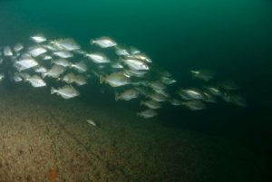 SS Kyarra diving site, Dorset
