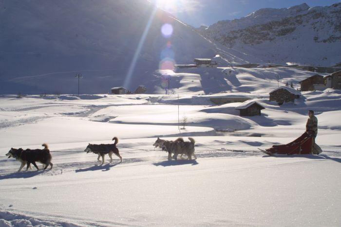 Dog sledding in the Alps