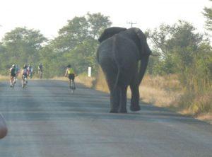 Bull elephant on Tour d'Afrique