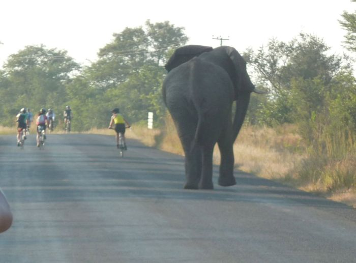Bull elephant on Tour d'Afrique