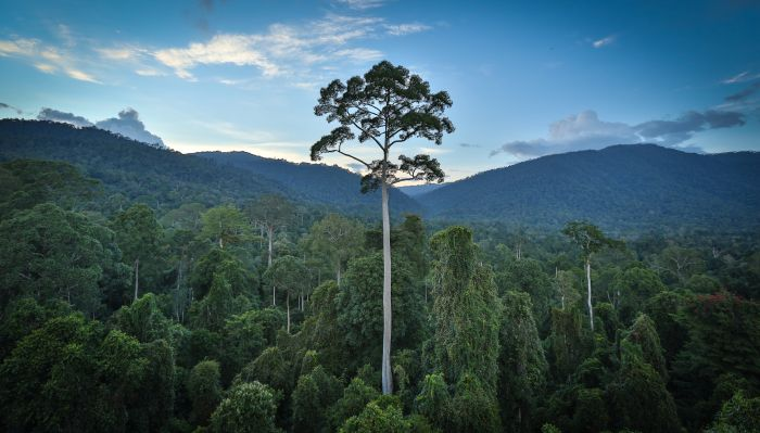 Volunteering in Borneo