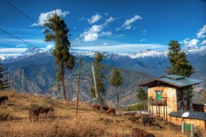 Stables on top of Mountains, Bhutan