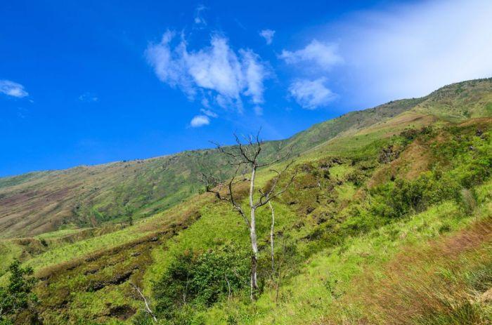 Mount Cameroon, Cameroon