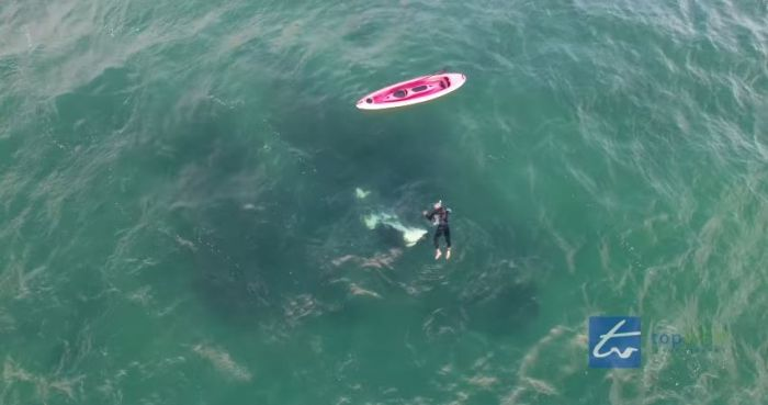 Kayaker swims with orca whale