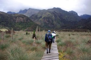 Trekking Rwenzori Mountains, Uganda