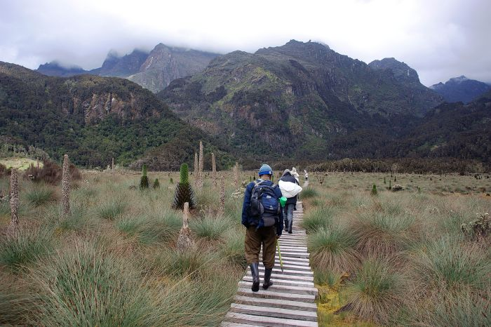 Trekking Rwenzori Mountains, Uganda