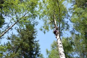 Tree climbing in the Southern French Alps