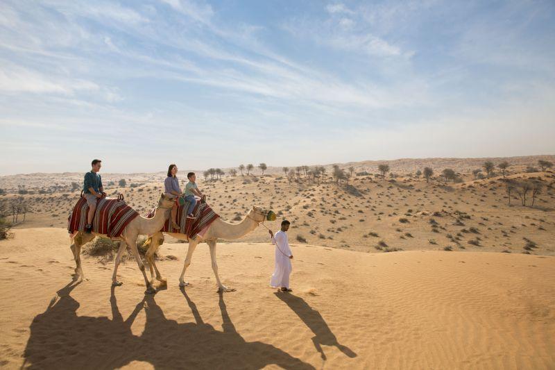 Camel trekking in Al Wadi Desert, Ras Al Khaimah