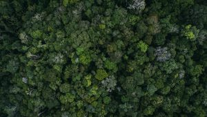 Amazon jungle in Brazil