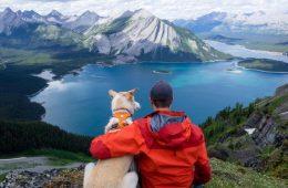 Jaspeywood adventure dog on Instagram