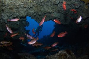 Diving St Helena
