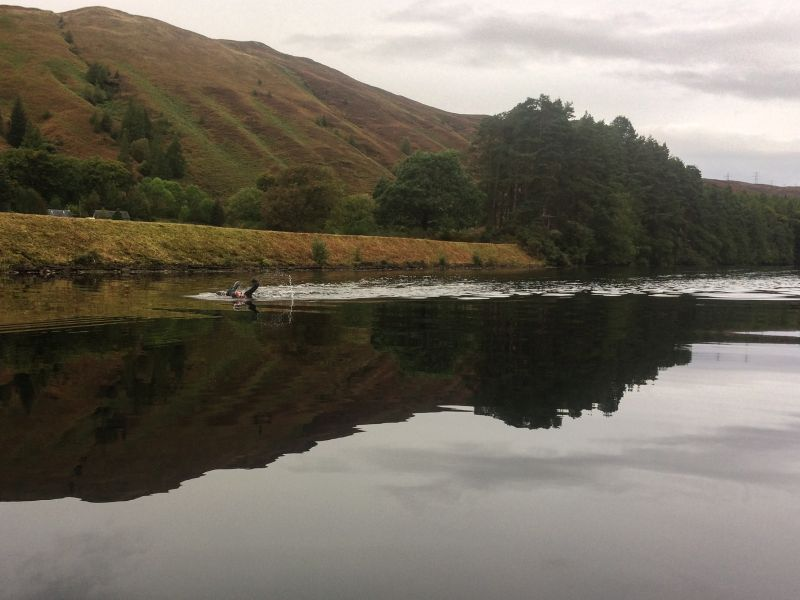Scottish loch swimming