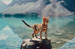 Sukii the adventure cat