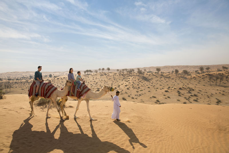 Camel trekking in Ras Al Khaimah