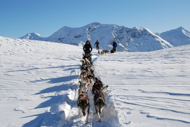 Husky sledding in the French Alps