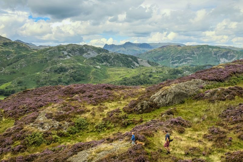 Holme Fell Lake District