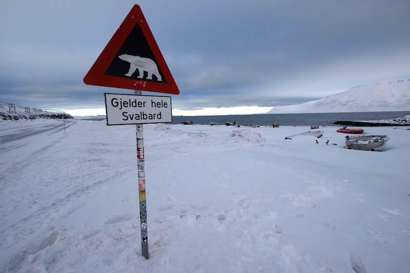 Polar bear sign