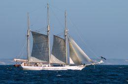 A sailing boat at sea