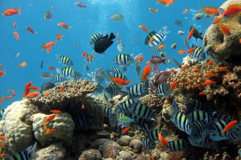 Snorkelling coral reef