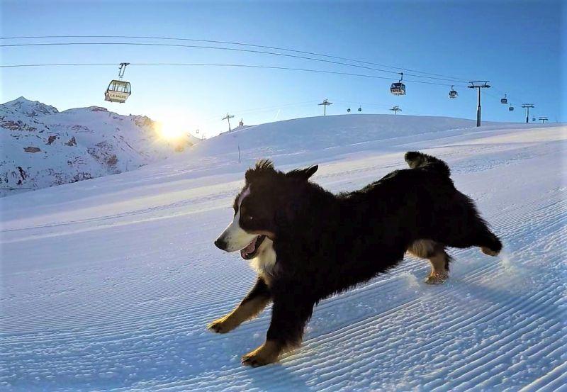 Adventurer Bernese dog morning ski