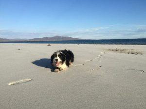 Dog on beach Outer Hebrides