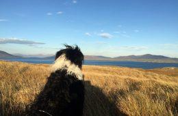 Dog walk Outer Hebrides Scotland