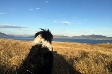 Dog walk Outer Hebrides Scotland