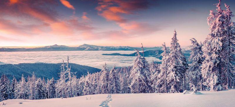 Arctic Adventure Parkinson's UK