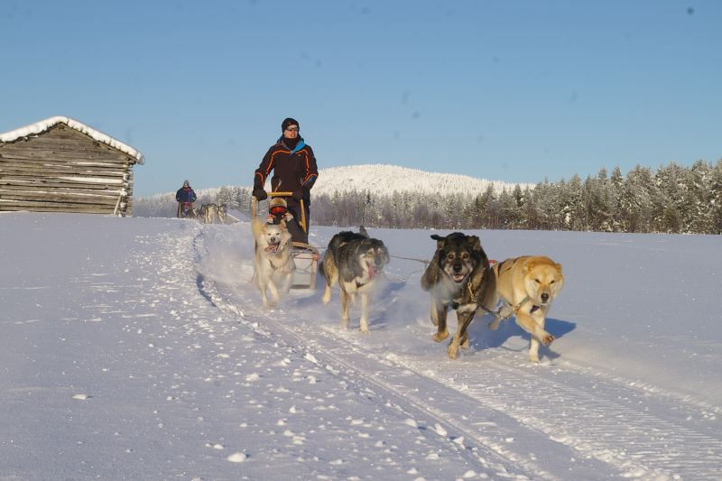Dog sledding Finland Parkinson's UK