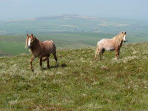 horses golden road - best one-day walks in wales