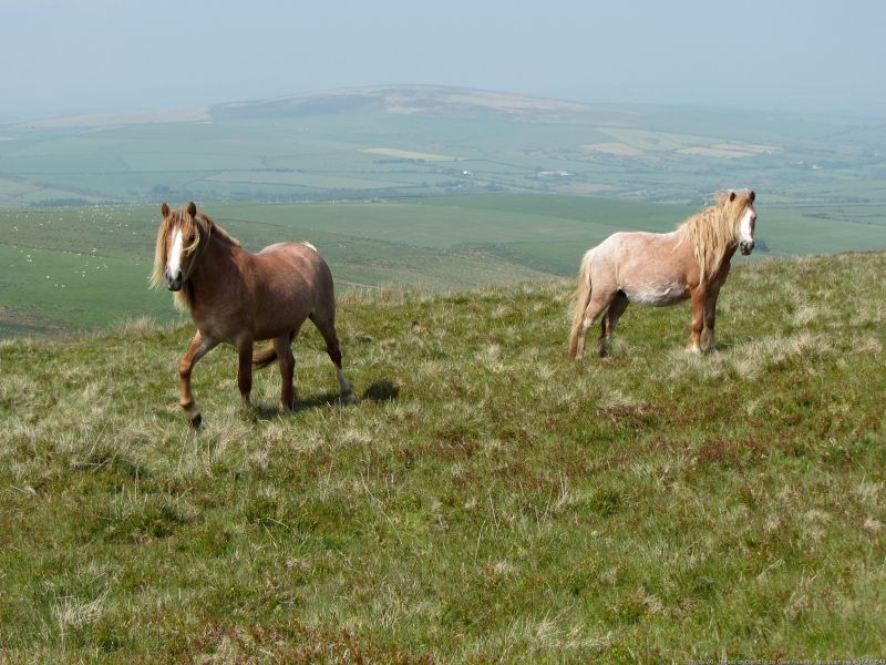 horses golden road - best one-day walks in wales