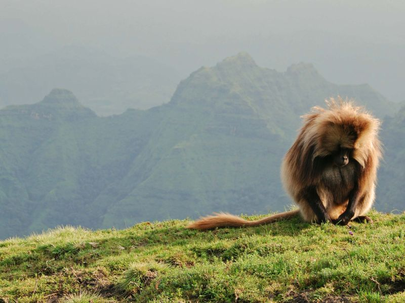 simien monkey, ethiopia, best hiking destinations outside of europe