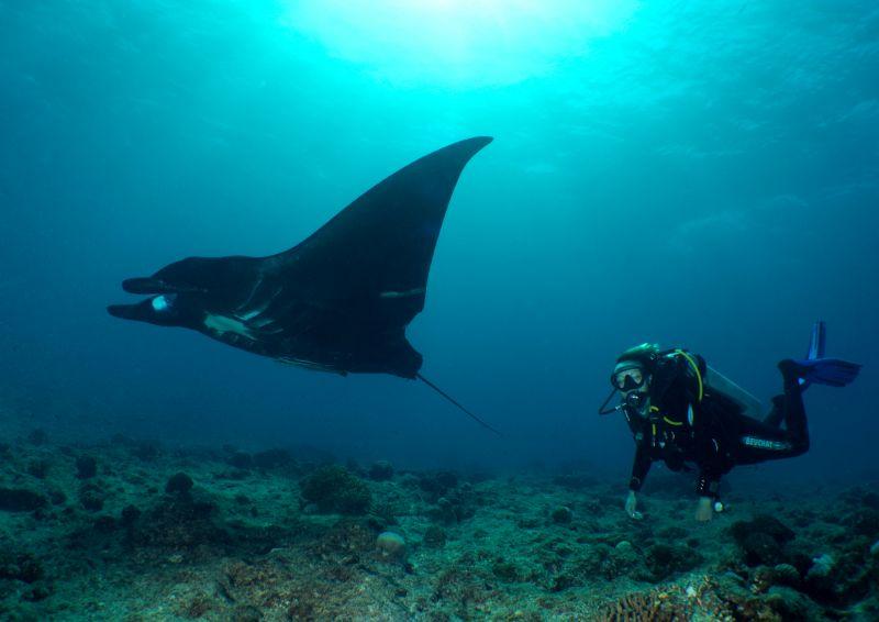 Plongée sous-marine - Scuba Diving - New Caledonia