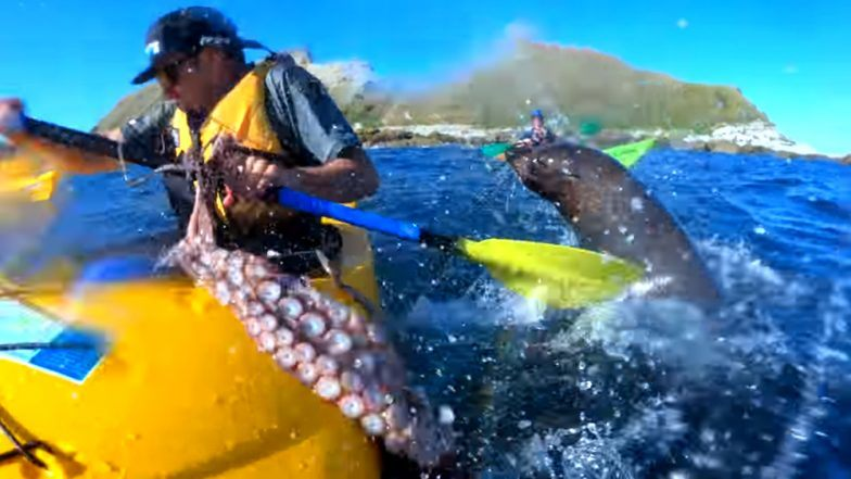 kayaker gets slapped in the face by giant octopus