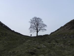 Sycamore gap robin hood tree - best winter uk walking routes