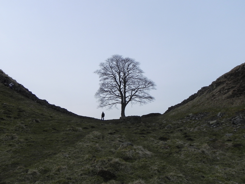 Sycamore gap robin hood tree - best winter uk walking routes