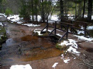 rothiemurchus forest bridge - best cold weather walks in scotland