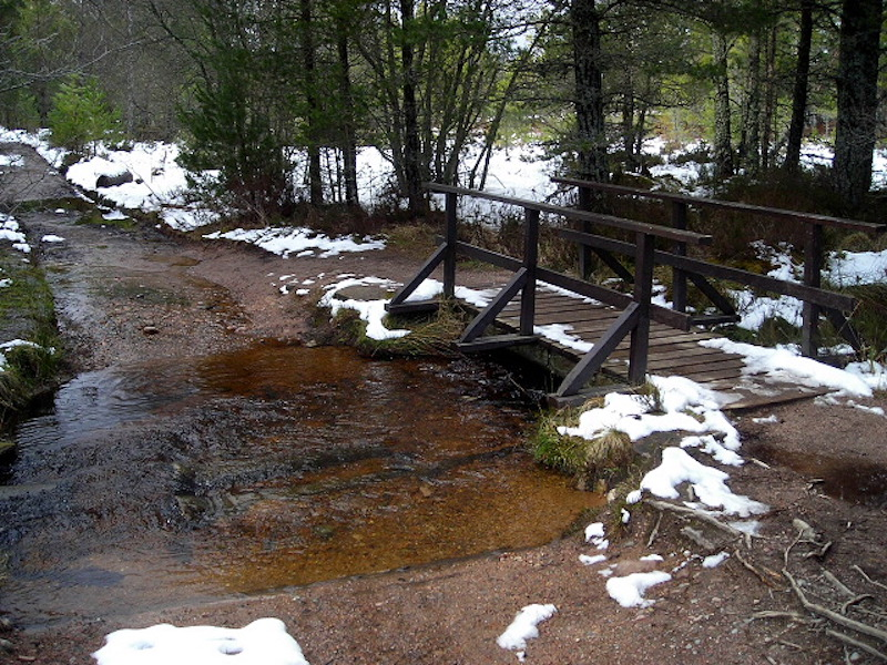 rothiemurchus forest bridge - best cold weather walks in scotland