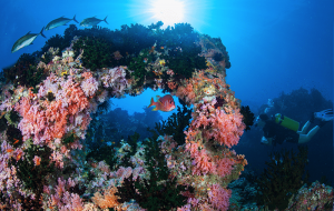 diving adventerous things to do in maldives