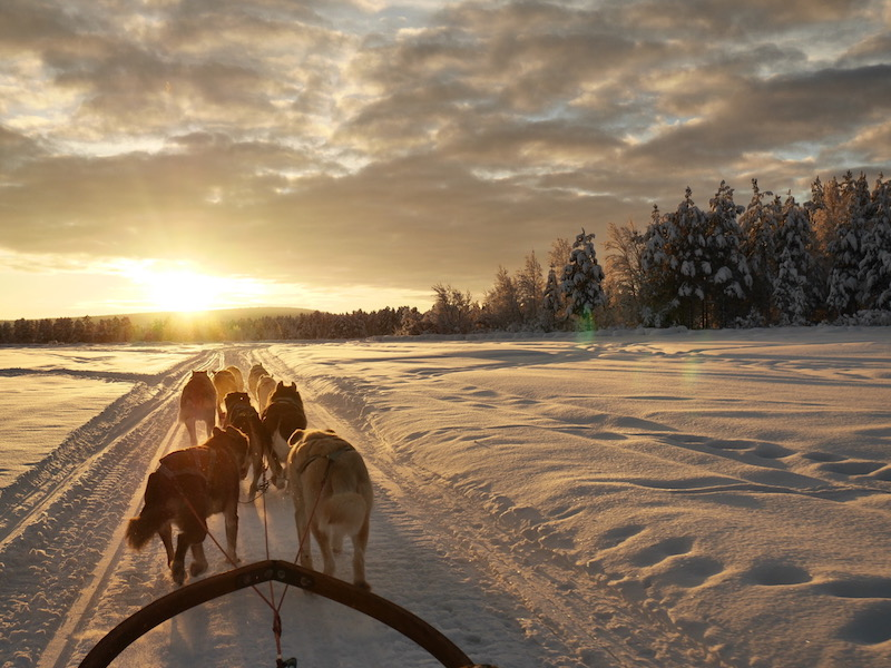 husky sledding in finland - winter adventures